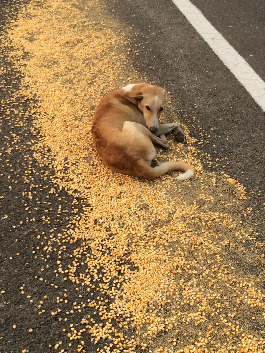 A real life shaggy dog story