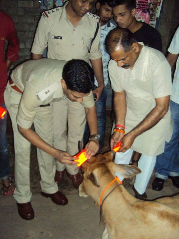 INDIA-Cows-get-glow-in-the-dark-horns-to-stop-crashes