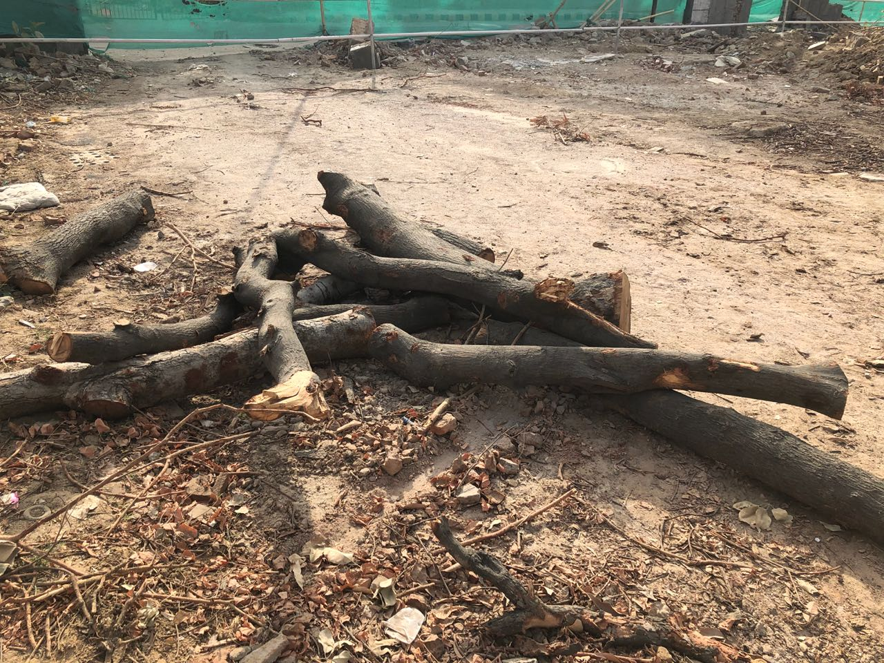 The tragic saga of Delhi's 16,500 doomed trees