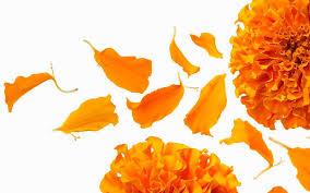 Of booze & flower petals